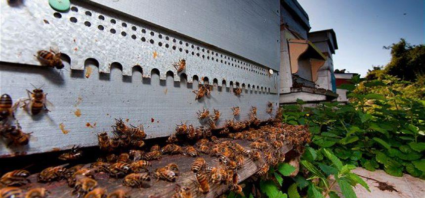 κάμερα μελισσοκομίας beehive camera