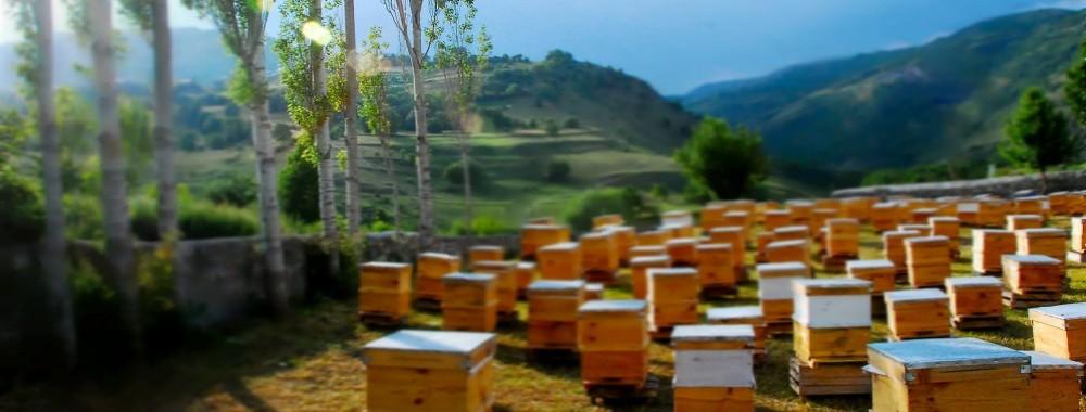 beehives4-e1417877516281