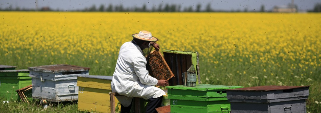 beekeeper-and-field4-e1417882240724